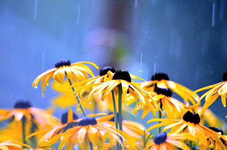 flowers-2611590__480